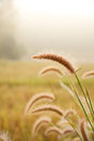 Grass Flower Field Stock Images - 37041514