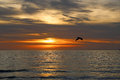 Pelican S Silhouette At Sunset Stock Photo - 37069930