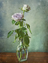 Two Pink Roses In A Glass Bottle Royalty Free Stock Photos - 37081698