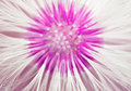 Head Of Dandelion Stock Images - 37124754