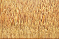Thatch Roof Texture Stock Photo - 37154280