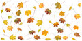 Autumn Leafs Royalty Free Stock Photography - 3729857
