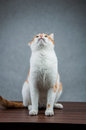 Sweet Cute Cat In Home Stock Photos - 37237193