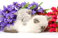 Two Cute Kittens Sleeping Royalty Free Stock Photos - 37267168