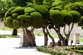Outstanding Cypress Trees In Retiro Park In Madrid, Spain Stock Photography - 37284602