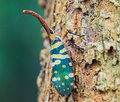 Lanternfly Royalty Free Stock Photography - 37368337