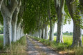 Country Road In Provence Royalty Free Stock Photo - 37389665