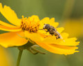 Bees And Flowers Stock Photos - 37407333