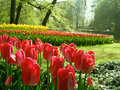 Garden With Tulips Royalty Free Stock Photos - 37449068