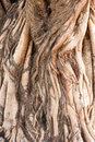 Root Of Tree Royalty Free Stock Photos - 37479338