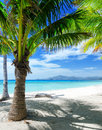 Green Tree On A White Sand Beach Royalty Free Stock Photography - 37481137