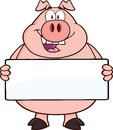 Happy Pig Cartoon Character Holding A Banner Royalty Free Stock Photography - 37484527