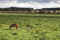 Grazing Horse Stock Photography - 3756422