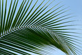 Leaf Palm Trees Stock Photography - 37501312