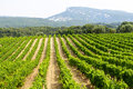 Vineyard In Provence Royalty Free Stock Image - 37517476
