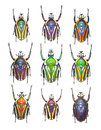 Flower Beetles In White Background Stock Photo - 37533710