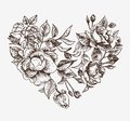 Sketch Heart Stock Photography - 37556602