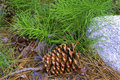 Pine Cone On Forest Floor Royalty Free Stock Photo - 3764515