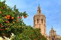Orange Tree And Valencia Cathedral. Royalty Free Stock Image - 37621116