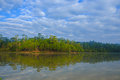 Water Reflection Of Pine Tree Royalty Free Stock Images - 37634369