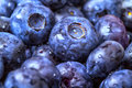Blueberries Royalty Free Stock Photo - 37653625