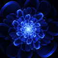 Beautiful Blue Flower On Black Background. Computer Generated Gr Stock Images - 37666424