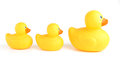 Ducks In A Row Stock Photography - 37684772