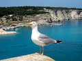 Seagull Royalty Free Stock Image - 37685236