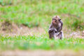 Monkeys Of Thailand Royalty Free Stock Images - 37702669