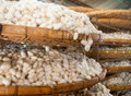Silkworm Cocoons Royalty Free Stock Photos - 37704958