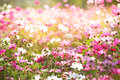 Floral Backgrounds Stock Photo - 37725690
