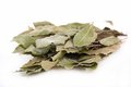 Bay Leaf Royalty Free Stock Photography - 37730977