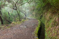 Laurel Forest On Madeira Royalty Free Stock Images - 37754569