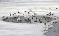 Birds In Winter. Stock Photography - 37756782