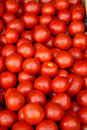 Tomatoes Stock Photo - 37786350