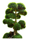 Bonsai Tree In Garden Isolated On White Stock Photography - 37794262