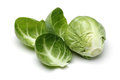 Brussels Sprout Stock Image - 37806001