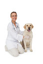 Happy Vet Petting Yellow Labrador Dog Smiling At Camera Stock Images - 37824624