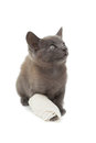 Cute Grey Kitten With A Bandage On Its Paw Royalty Free Stock Image - 37824746