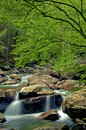A Small White Water Stream In The Smokies Royalty Free Stock Image - 37862106
