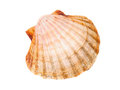 One Scallop Isolated Royalty Free Stock Photo - 37862155