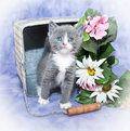Sweet Kitten Stock Images - 37877874