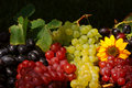 Grapes In Vintage Fruit Box Stock Photography - 3791212
