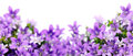 Frame Of Bluebells Stock Photography - 37902852