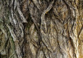 Dark Bark Texture Royalty Free Stock Images - 37907409