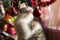 Cat Under Christmas Tree Royalty Free Stock Images - 37911949