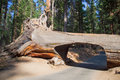 Tunnel Tree In Sequoia National Park Royalty Free Stock Photos - 37963308