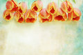 Border Of Orange Tulips Stock Image - 37966211