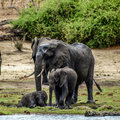 Elephant Cubs Stock Photo - 37981370