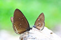 Closed Up Of Butterfly Royalty Free Stock Photos - 37990538